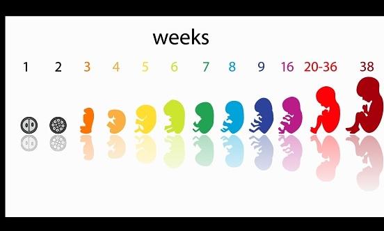 Kako raste i kako se razvija Vaša beba!