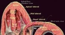 1537953758_interna dijagnostika ehokardiografija galerija 2